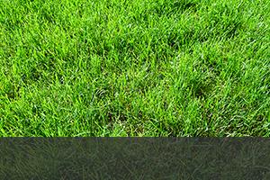 芝刈り・草刈り
