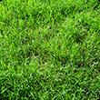 草刈り・芝刈り