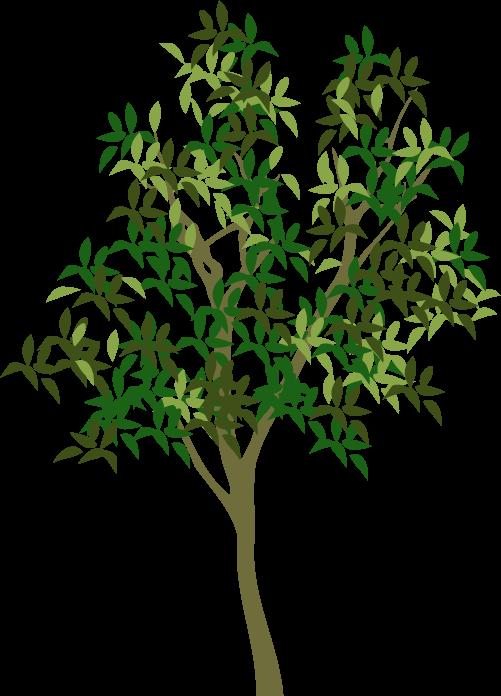 単幹樹木イメージ